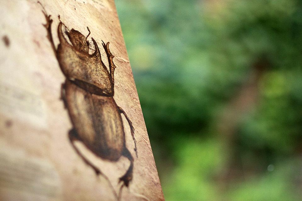 scarabaeidae-06.jpg