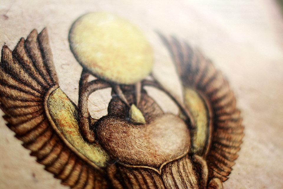 scarabaeidae-07.jpg