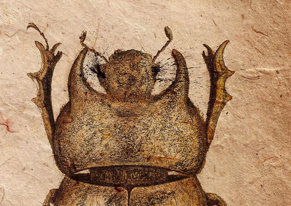 scarabaeidae-11.jpg