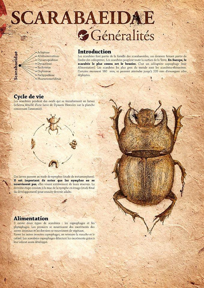 scarabaeidae-02.jpg